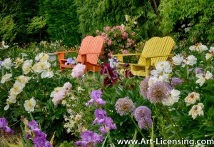 7150-Peonies, Allium, Iris, Orange and Yellow Bench in the Garden