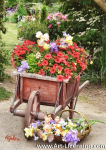 7395TS-Iris and Petunia in Wheel Barrow in the Garden