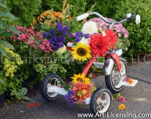 9681S-Mums, Dahlias and Sunflowers on Tricycle